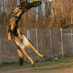 Gretchen, the German Shepherd, takes flight