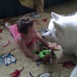 Ducky the Samoyed with baby Liz.