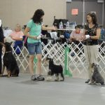 Callie & Dylan at the dog show.