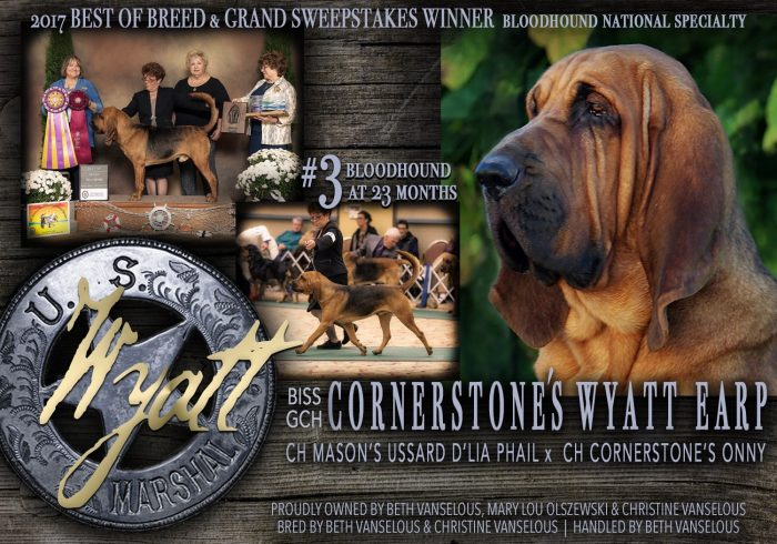 Best of Breed Bloodhound.