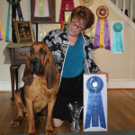 Example of a Bloodhound - Wyatt.