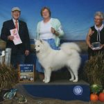 Ann Moore McMagic-L Pebble Prncs Sofia at the dog show.